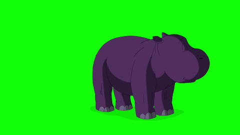 Little Violet Hippo Runs Front View, Stock Animation