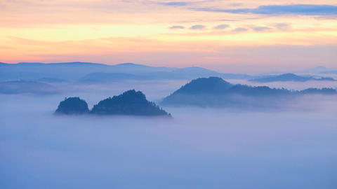 30fps timelapse. Spring misty morning in forest landscape. View around. Majestic Image
