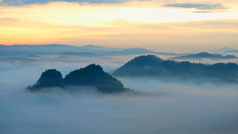 60fps timelapse. Spring misty morning in forest landscape. View around. Majestic Live Action
