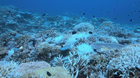 A coral reef dies Archivo