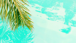 Palm above swimming pool Stock Video Footage