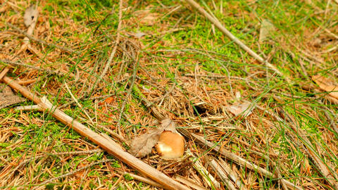 Man legs came to mushroom hidden mossy ground of autumnal forest. Man arms in Footage