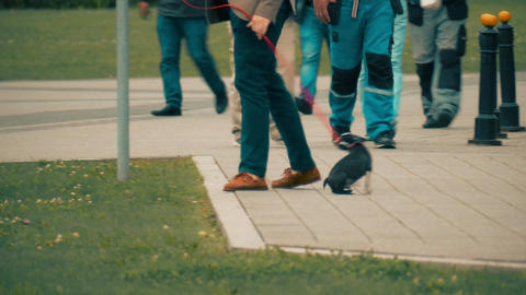 Man walking the dog in the city park Image