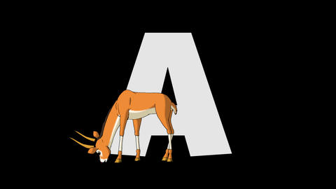 Letter A and Antelope (foreground) Animation