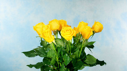 Rotating yellow rose bunch on blue Footage