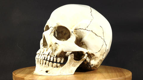 The skull is rotating Image