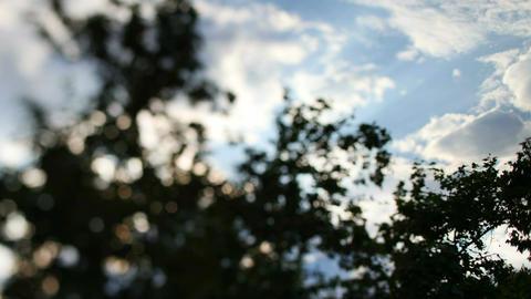Bokah sky trees Footage