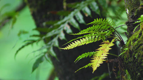 moss and fern leaf in rain forest of highland in Thailand,foliage object in Footage