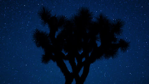 Joshua tree night sky silhouette Live Action