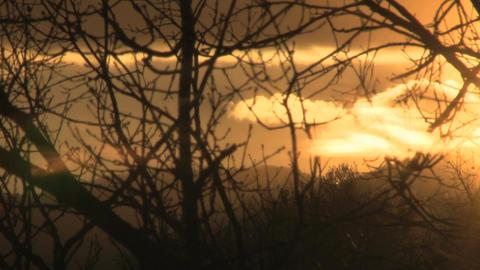 Orange sunset through winter branches Footage