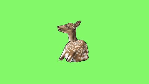 Deer Animation