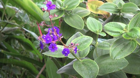 Small purple flowers in the rain Stock Video Footage