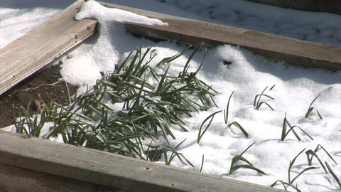 Snow melting in flowerbox Live Action