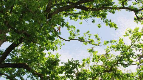 Tree canopy towards sky Live Action