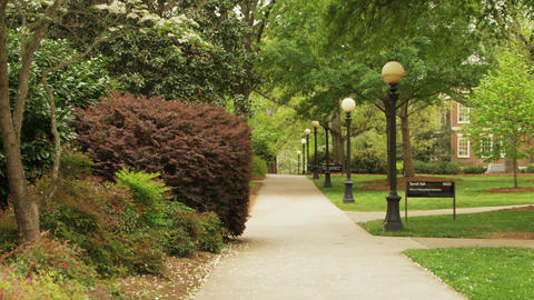 Tree lined path on college campus Footage