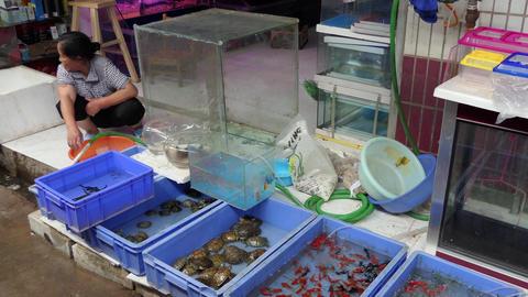 Woman Selling Pets Animals Goldfish Turtles At Market China Asia Footage