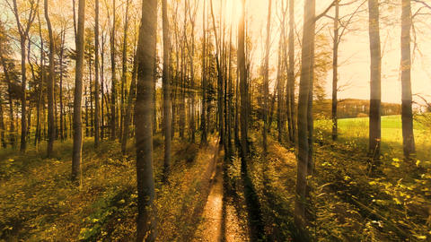 Woods forest trees green nature background Footage