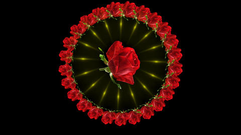 RED ROSECIRCLE CG動画素材