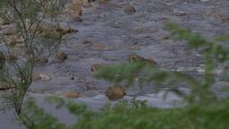 Streaming River, Glen Etive, Scotland Archivo