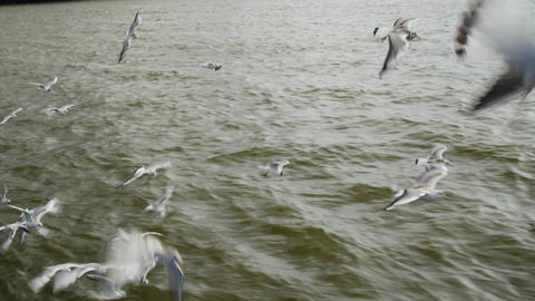 Many gulls flying over the water. Flock closeup 画像