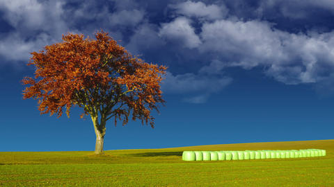 Tree and hay bales Stock Video Footage
