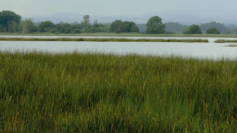 Long grass and water Stock Video Footage