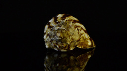 Rotating shell Stock Video Footage