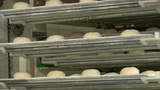 10739 german bakery roll bun on conveyor belt elevator Footage