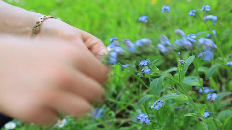 Hands making floral wreath Stock Video Footage