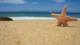 Starfish Footage