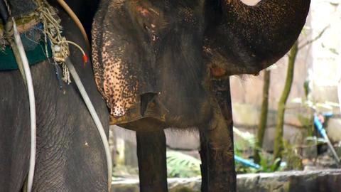 Elephant farm Stock Video Footage