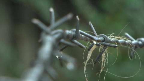 Barb wire on rain Stock Video Footage