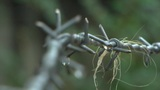 Barb Wire On Rain stock footage