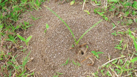 Ant Colony Stock Video Footage