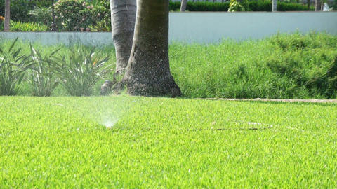 Garden Sprinkler Stock Video Footage