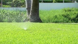 Garden Sprinkler stock footage