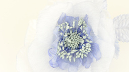 Blue fabric flower Stock Video Footage