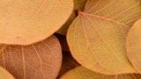 Autumn foliage Footage