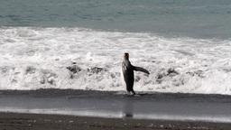 KIng penguin in the ocean Footage