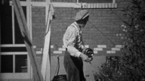 1935: Man spraying pesticide herbicide chemicals on rose bushes Footage