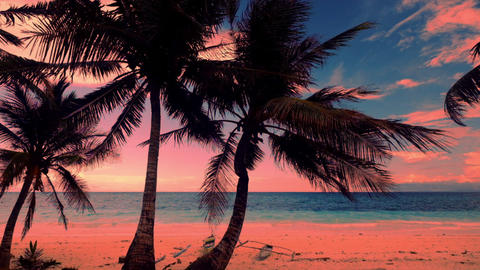 Colors of tropical sunset. Palm trees silhouettes at sandy beach. Philippines Footage