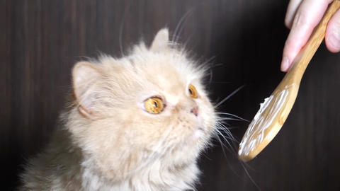 Slow motion of woman feeding hairball paste for cat Footage