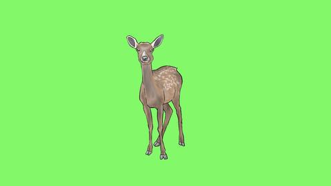 Deer 2 Animation