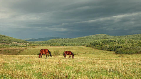 Horses graze in a pasture Footage