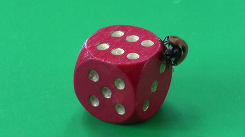 success concept. ladybug ladybird on red game dice Live Action