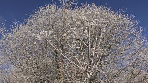beautiful winter Christmas New year time hoarfrost rime on plants Footage