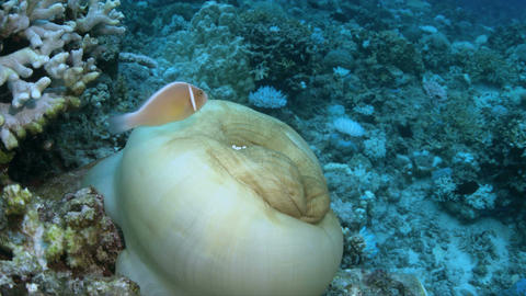 When a coral reef dies Footage