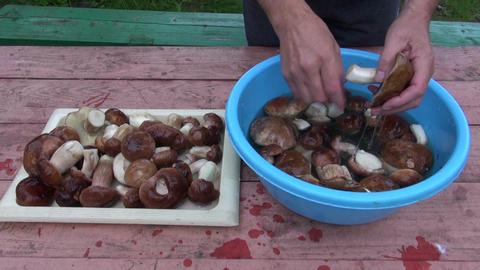 preparing edible mushroom fungi boletus on table Footage