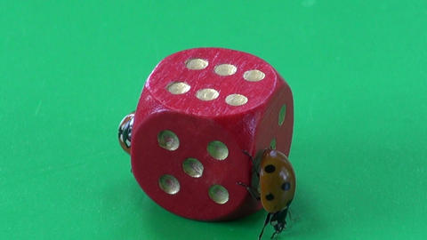 two ladybug ladybird ladyluck on red game dice with number six Footage