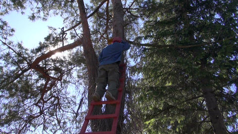 hammering new bird house nesting-box on tree Archivo